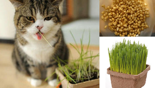 cat grass bag,cat grass packaging bag,cat treat bag